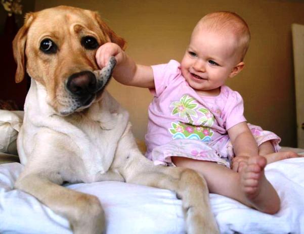 bebes-mascotas